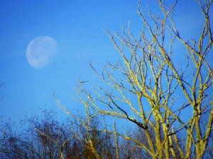 20101224moonsetinthemorning.jpg