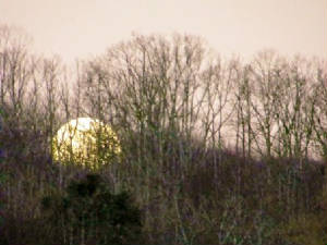 20110219morningmoonset.jpg