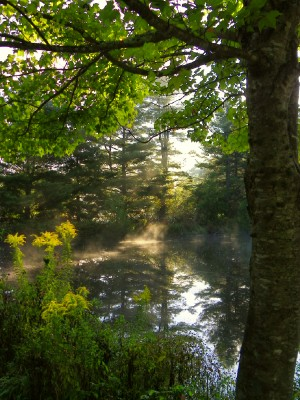 20100919goldenrodinmorninglight.jpg
