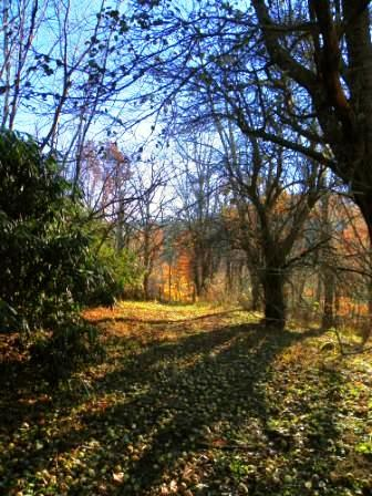 20101107morningwalk.jpg