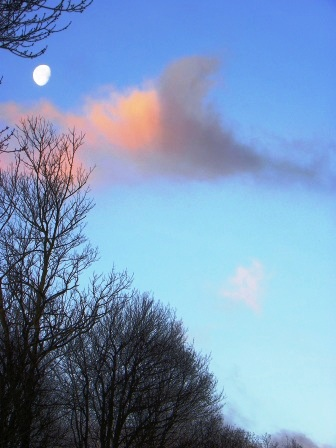 20110123januarymorningmoonsetportrait.jpg