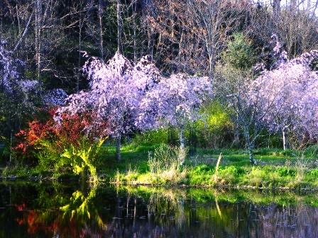 20110417reflection.jpg